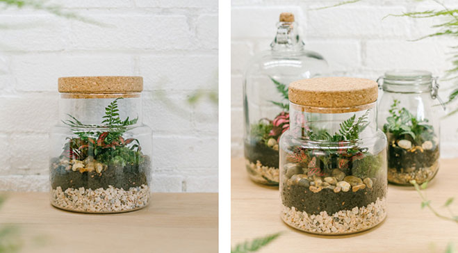 Jar and Fern: Terrarium Workshop